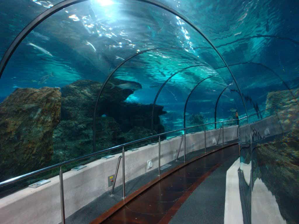 Proyecto de iluminaci n en el aquarium de barcelona for Aquarium de barcelona
